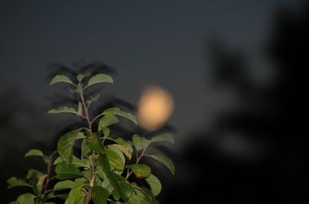 105-sorge-la-luna-sullo-spettacolo-di-casa-al-vento